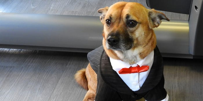 Dog in a suit