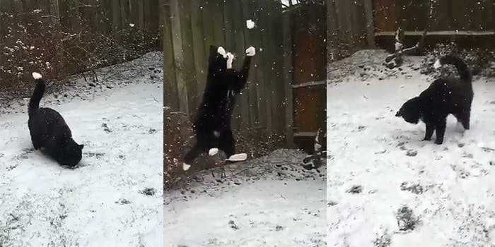 Cat catching snowballs in Twitter video.