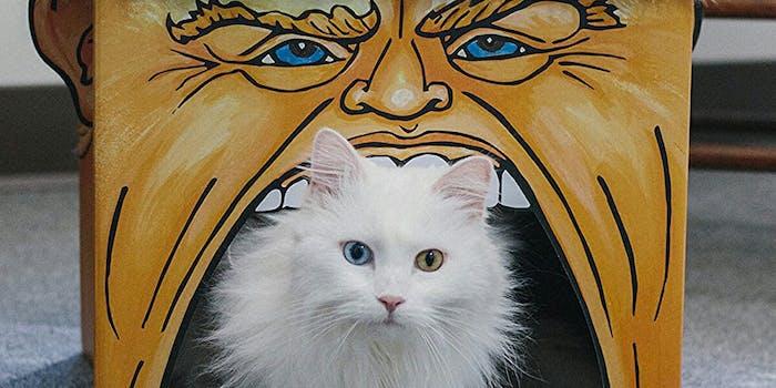 donald trump cat playhouse