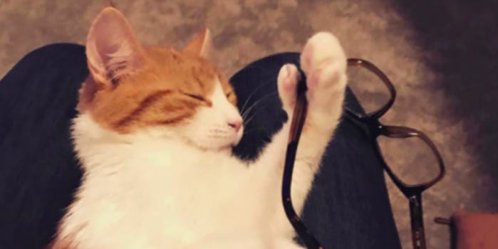 First cat of New Zealand dies