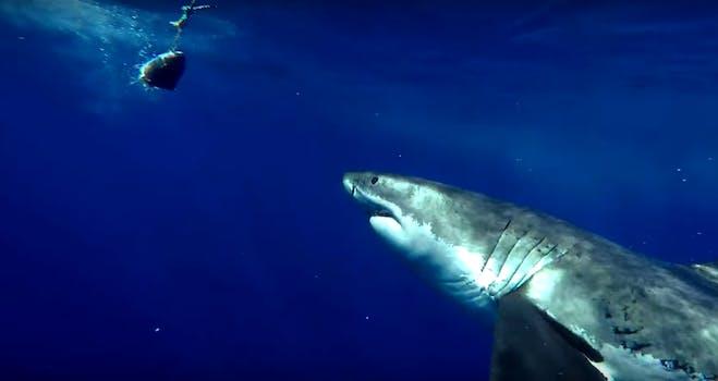 shark week 2017