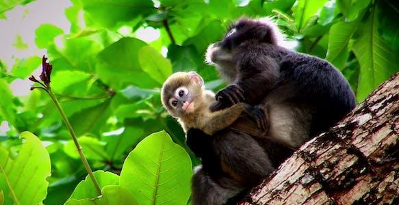 best netflix nature documentaries