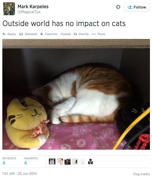 Mark Karpeles Tibanne cat
