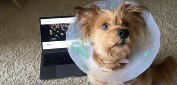 dogs listen to kendrick lamar