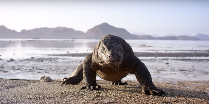 how to watch planet earth 2