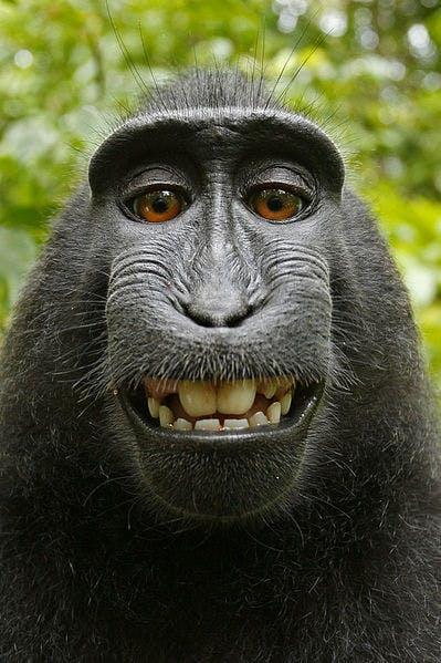 Monkey selfie #nofilter #tbt #tmot