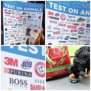 dog tests purina dog food animal testing meme