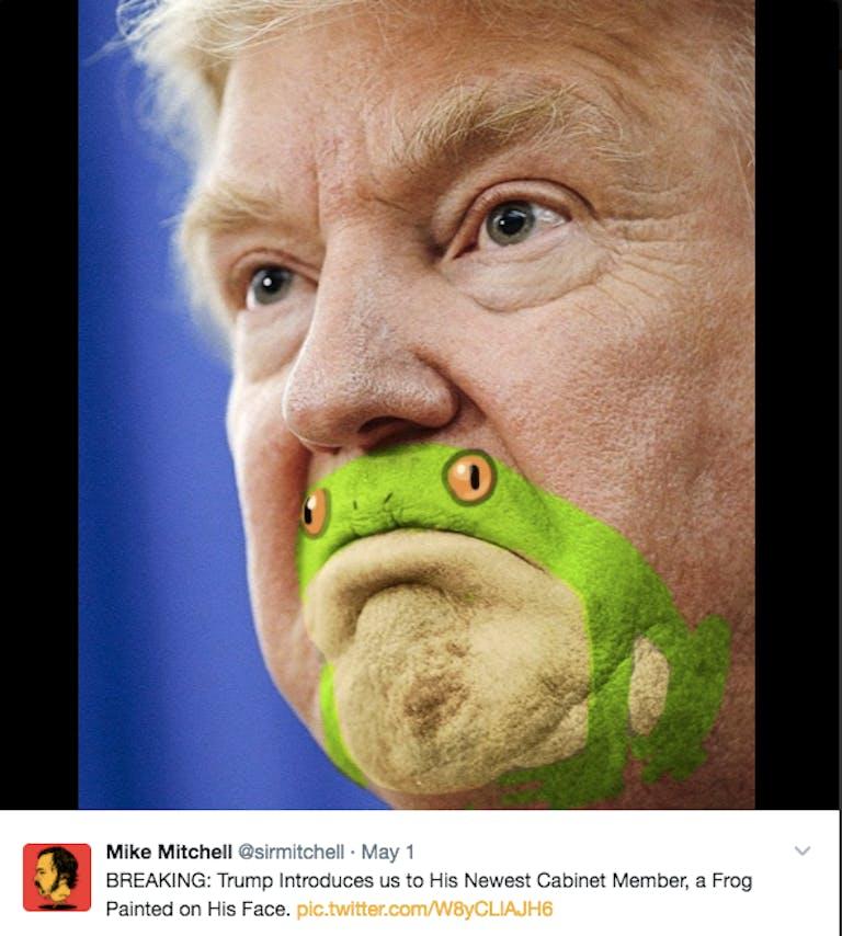 Trump frog meme