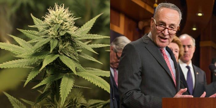 Senate Minority Leader Chuck Schumer is reportedly introducing a marijuana decriminalization bill on 4/20.