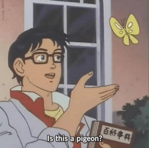 butterfly pigeon original
