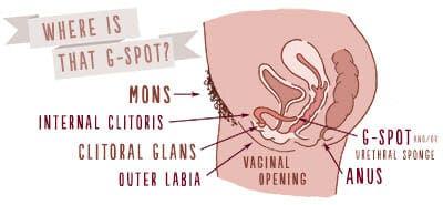 g-spot orgasm, g-spot orgasms