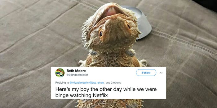 Bearded dragon dates are superior to human dates, according to Twitter.