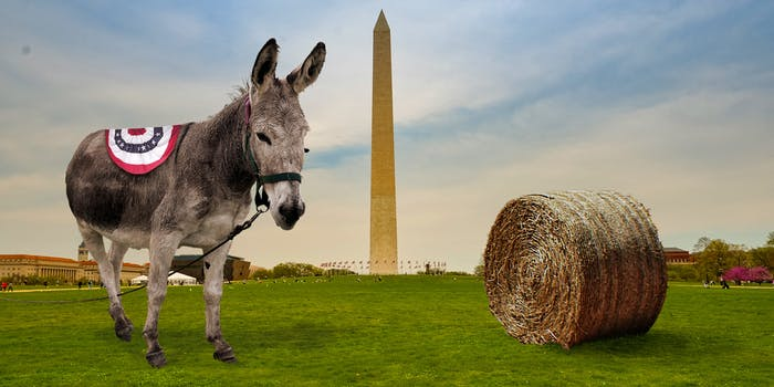 donkey at the national mall