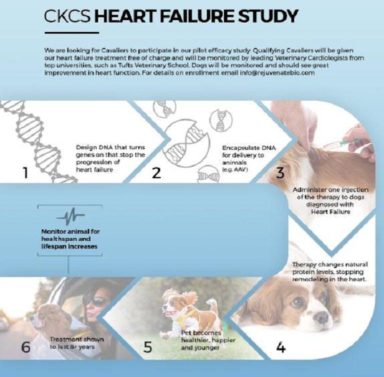 rejuvenate bio gene therapy dogs