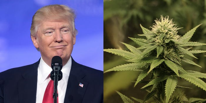 President Donald Trump said on Friday that he would 'probably' support a bill in Congress that would protect states that have legalized marijuana from interference from the federal government, according to reports.