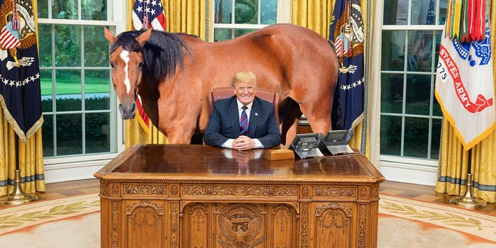 Triple Crown winner Justified in Oval Office with Donald Trump