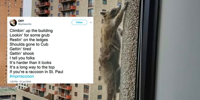 A raccoon dubbed #MPRRaccoon scaled a building in St. Paul, Minneapolis, causing anxiety on Twitter.