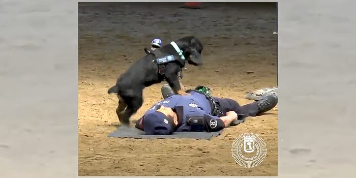 rescue dog performs cpr