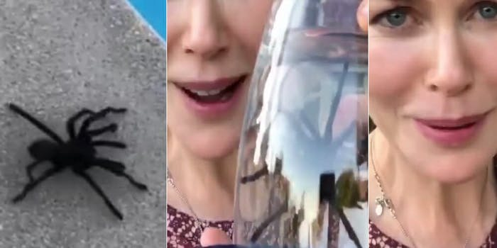 Nicole Kidman Tarantula Rescue