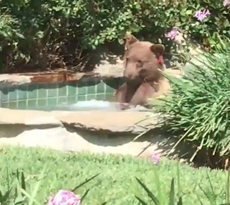 bear_hot_tub