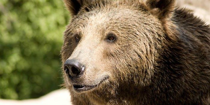 bear margarita hot tub