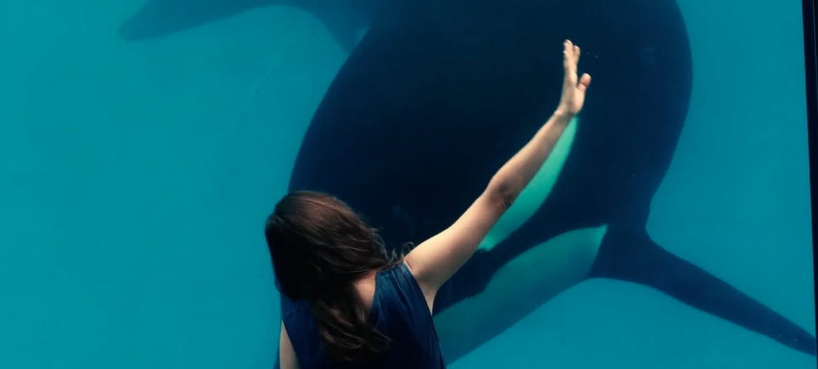 best french movies netflix - rust and bone