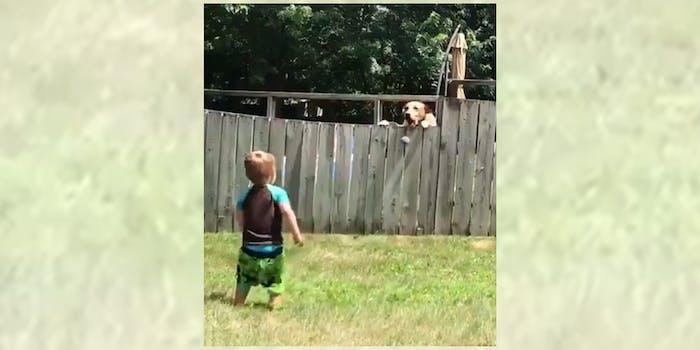 boy and dog play fetch through fence