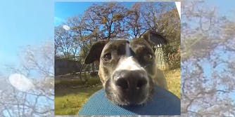 dog steals a go pro