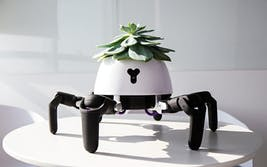 This six-legged robot designed to keep plants alive was created by Vincross founder Sun Tianqi.