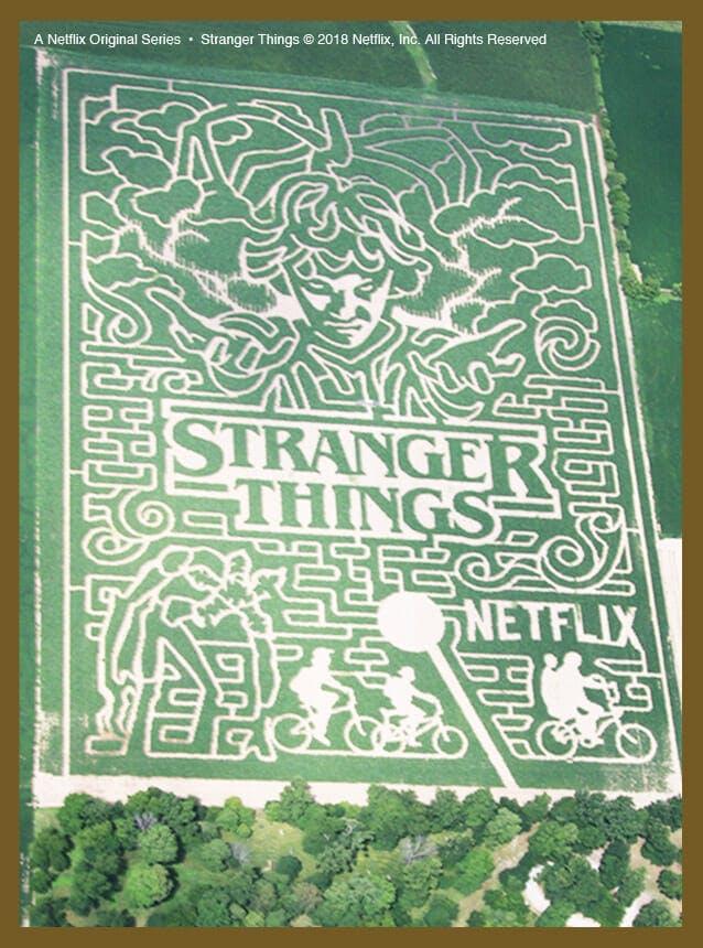 stranger things corn maze 1