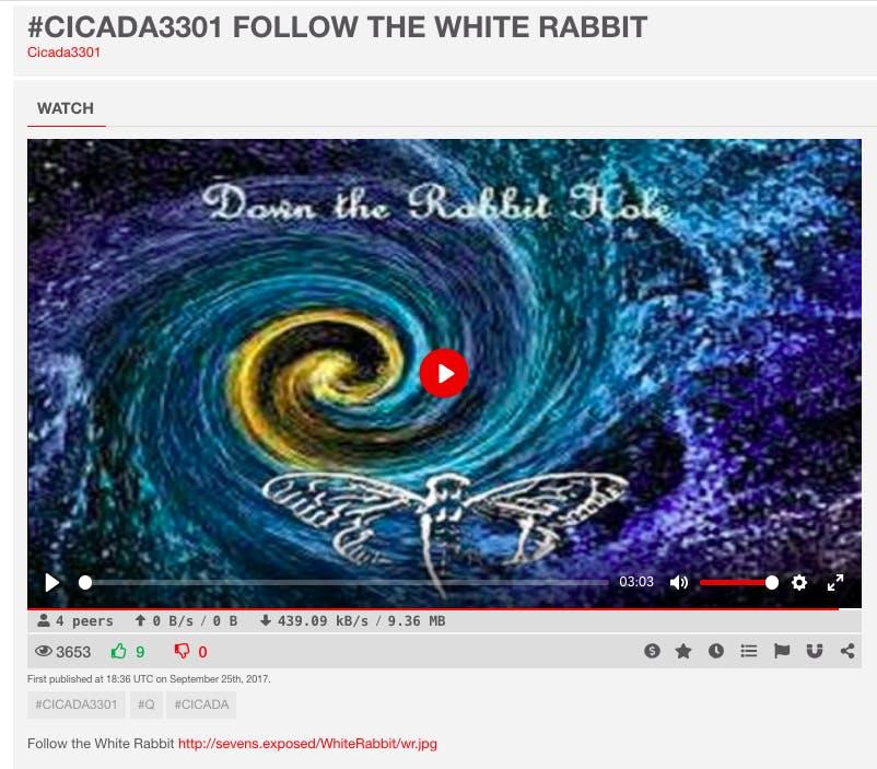 cicada white rabbit