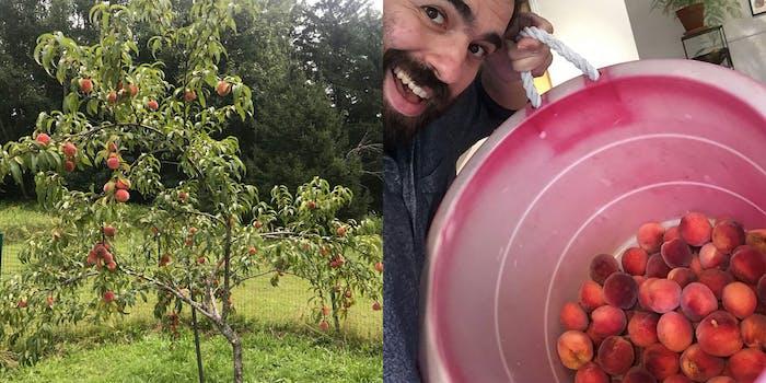 belvis peach tree bear vs podcast