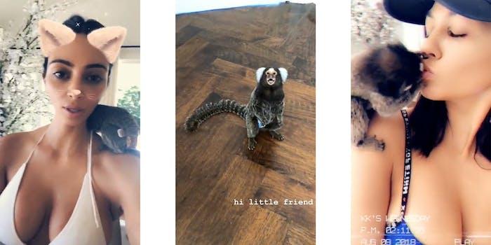 kardashians playing with marmoset