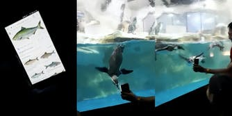 Penguins follow fish on a cellphone at the Manila Zoo.