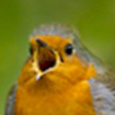 bird twitter avatar