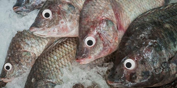 googly eye fish market