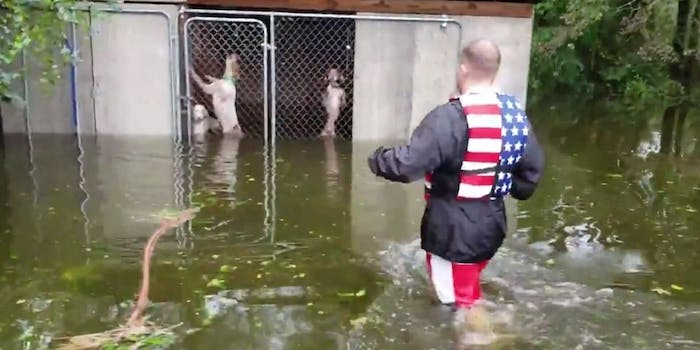 Hurricane Florence dog rescue video