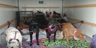 strangers help dogs in uhaul hurricane florence