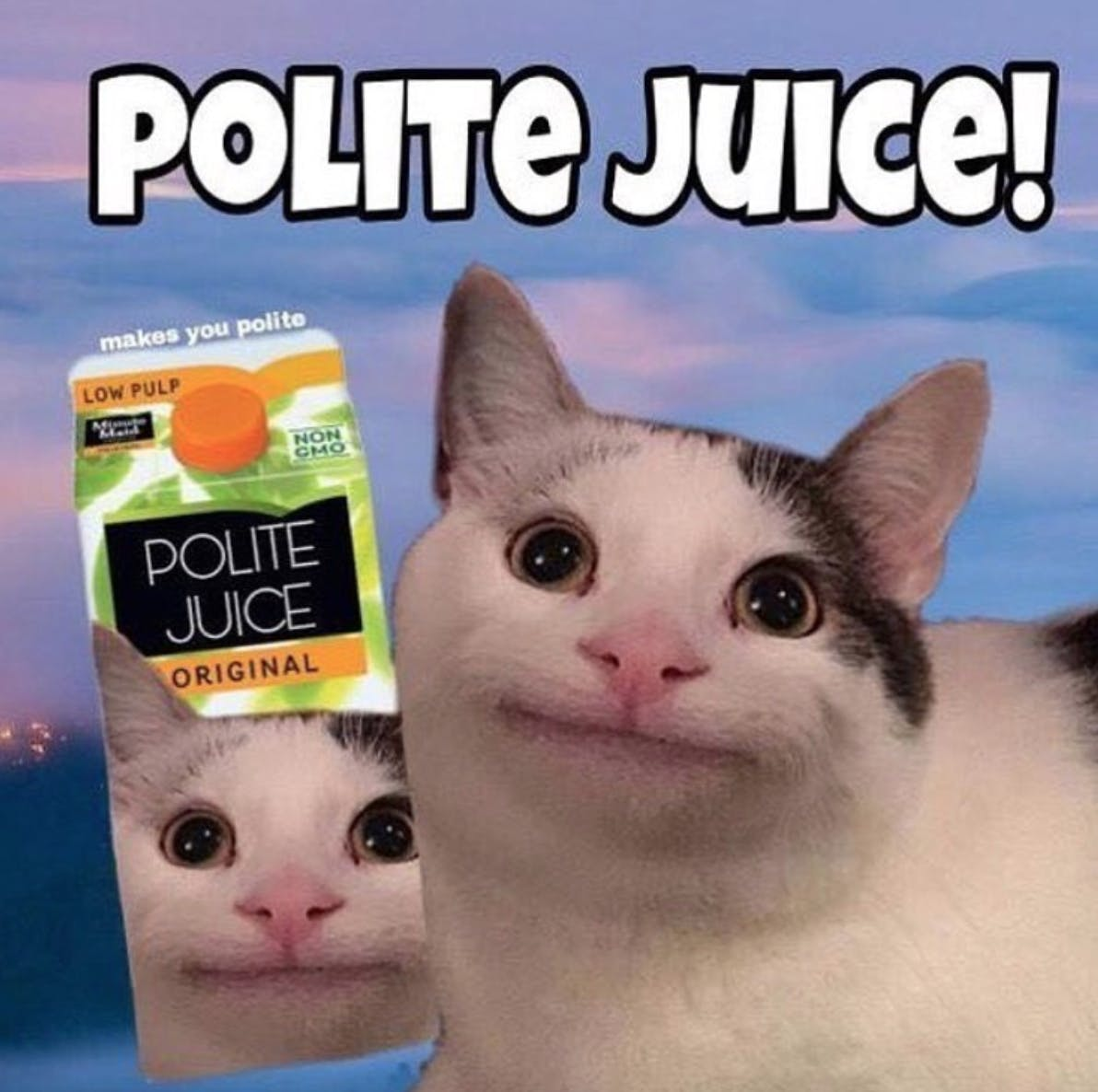 polite_cat_meme