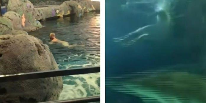 naked swimmer sharks toronto aquarium