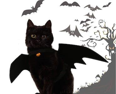 pet costume bat