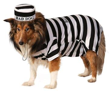 pet costume dog