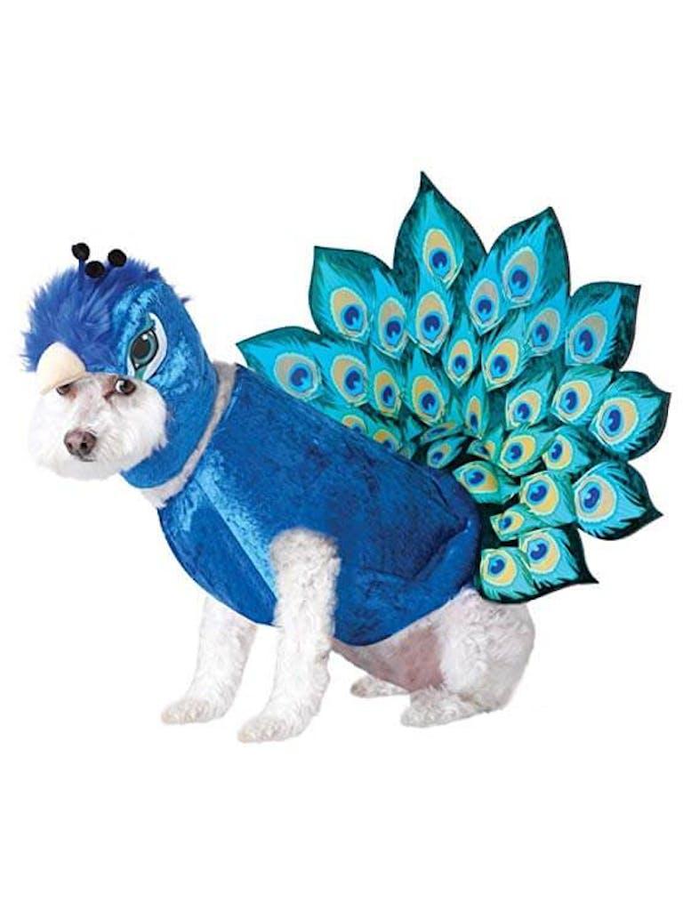 pet costume peacock
