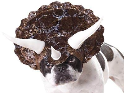 pet costume triceratops