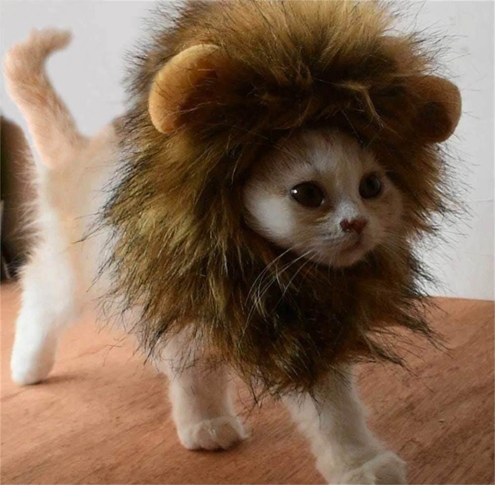pet costumes cat