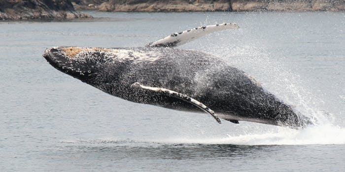 puget sound whale