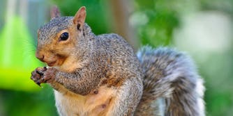 Frontier Flights booted a passenger and her emotional support squirrel.