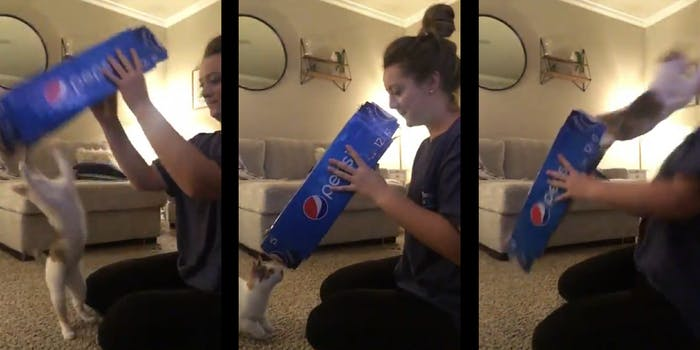 woman attacked by cat through pepsi box
