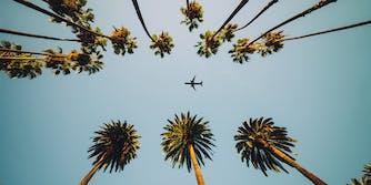 airplane palm trees