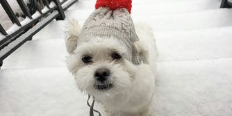puppy in snow with hat